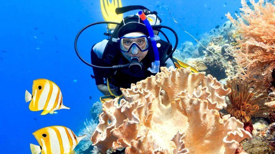 Dive in-depth to find the wonderful beauty of marine life