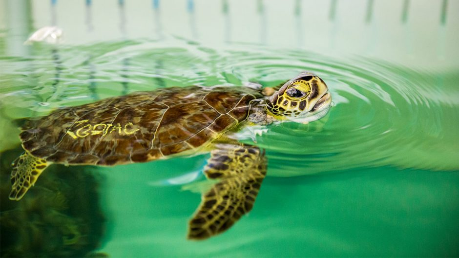 Importance of the conservation initiatives of the ocean biome life