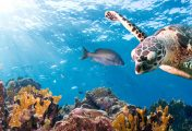 Marine life and how marine organisms are affected