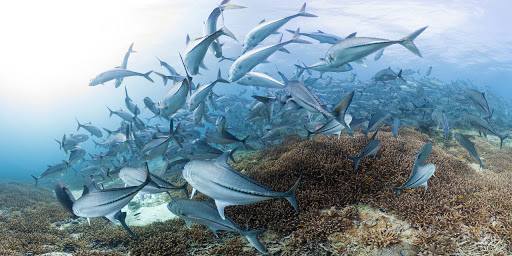 Be fascinated by exploring the ocean life