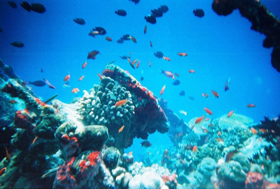 How Marine Life in the Maldives have diverse wildlife?