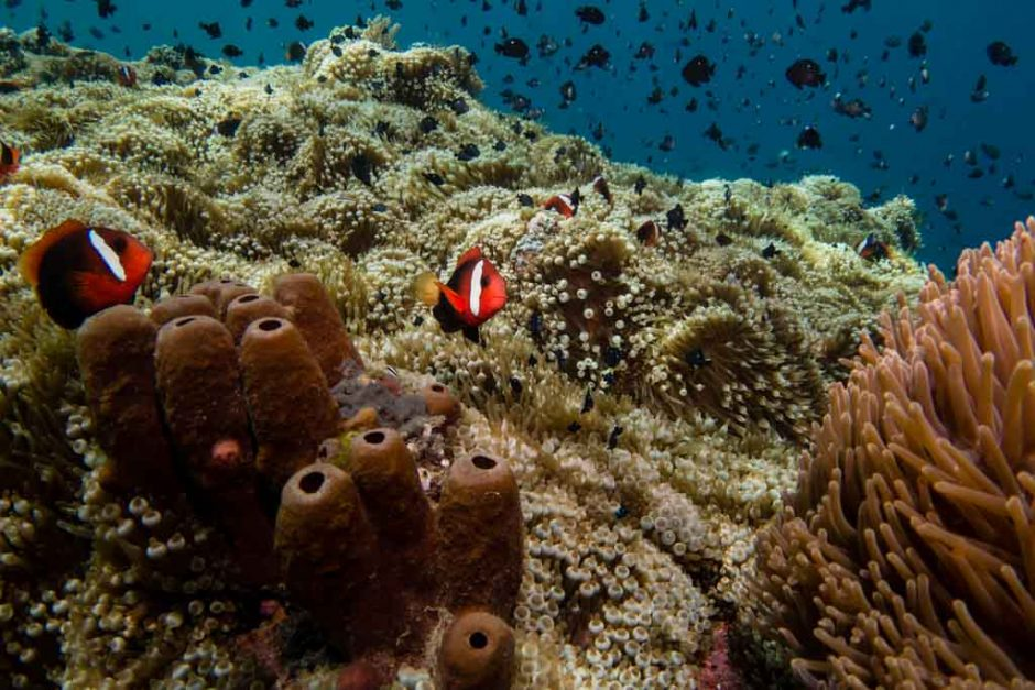 Marine Life Facts That Are Surprisingly Amazing