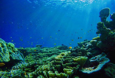5 Reasons-Why Ocean Is Important?