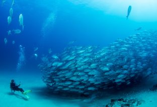 Which Ocean Has The Best Marine Life On The Earth?