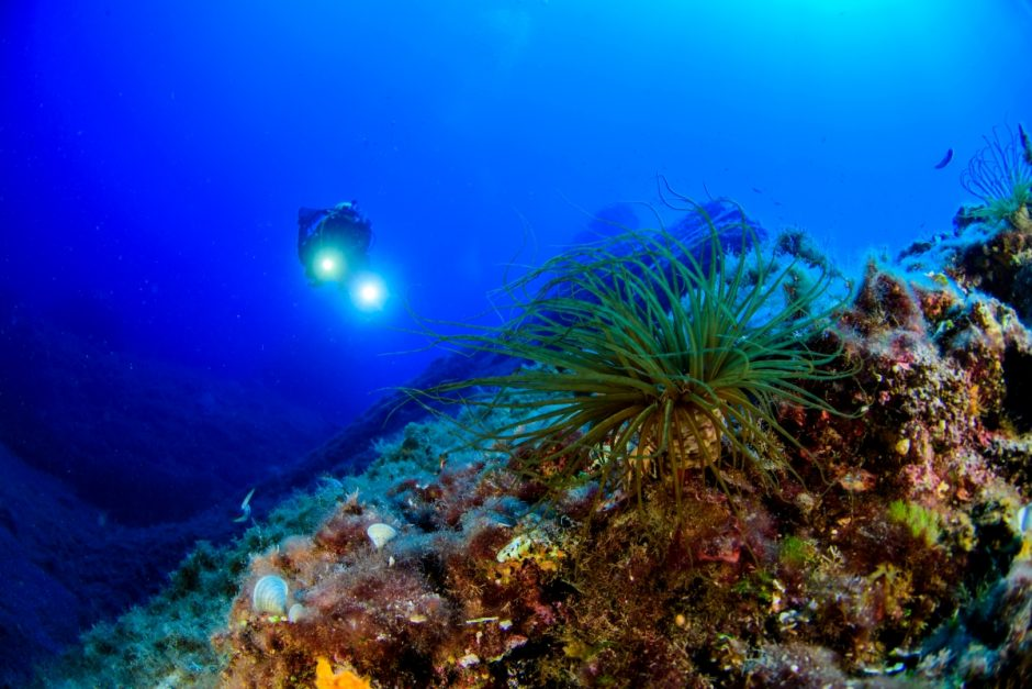 Why Is Ocean So Important? Some Crucial Reasons