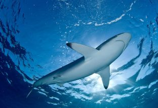 Marine life: The life of aquatic animals