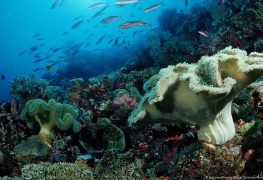 A Concern About The Oceans: Need Of The Hour