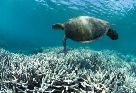 Here's Bringing Five Of The Most Significant Threats To Oceans, And Their Solutions