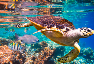 A Report On Marine Life And Ecosystem