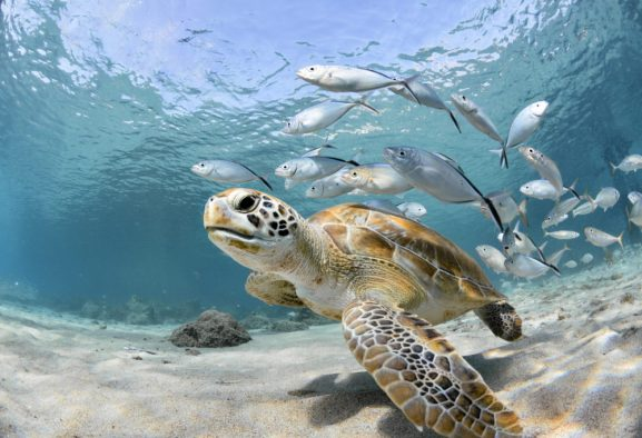 Ocean – Life System, an enormous economy