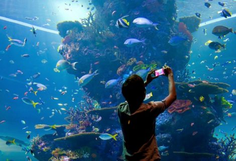 Know-How Can You Take Care Of The Marine Life
