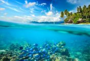 Know the importance of ocean life and marine life